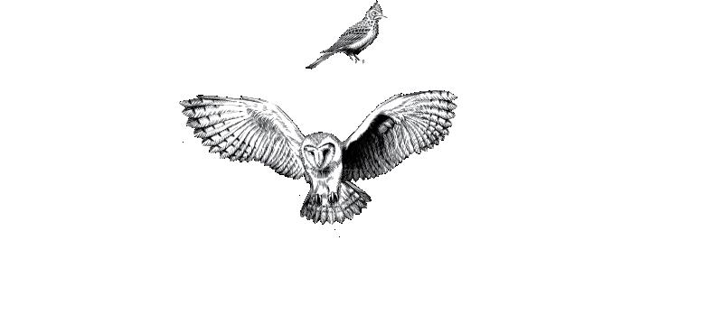 Owl + Lark Logo