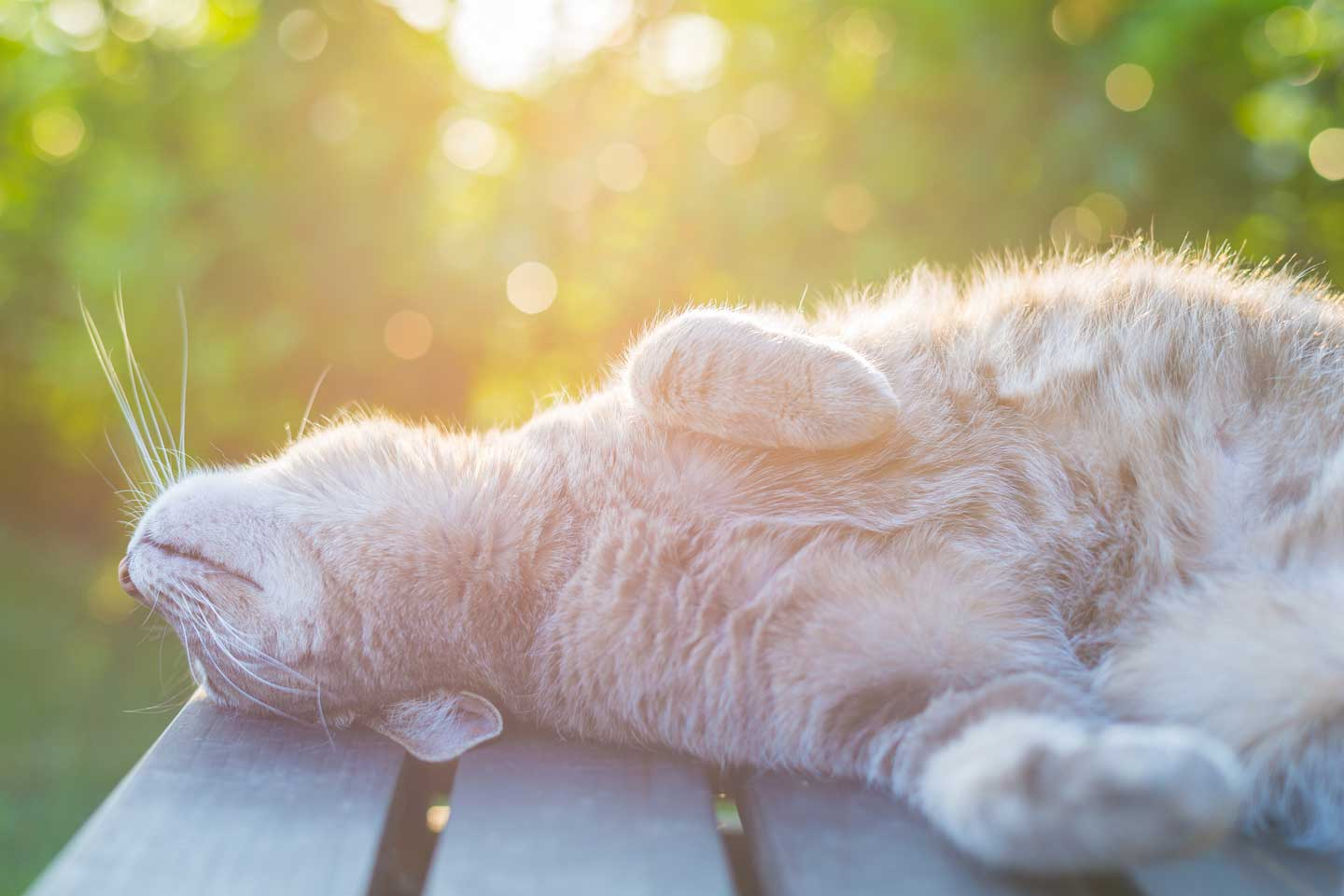 cat napping in sun