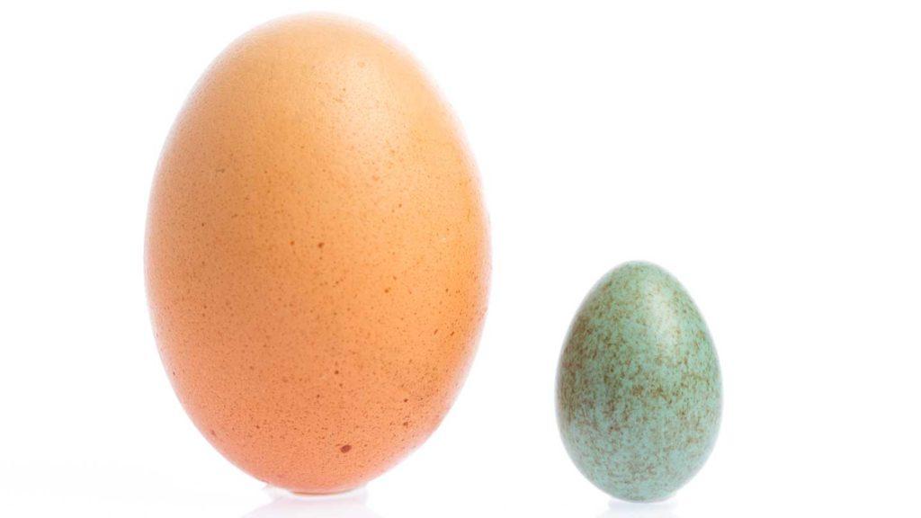 big egg small egg