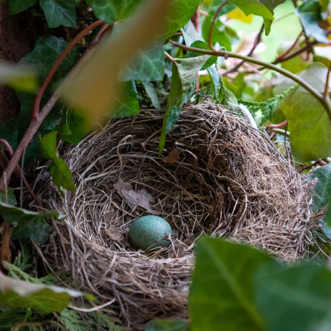 bird's nest with one egg